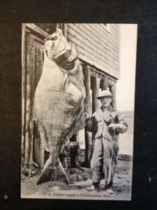 A 270 lb. Halibut caught in Provincetown, Massachusetts.