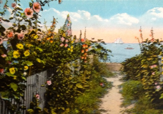 Hollyhock Lane glimpse of the harbor