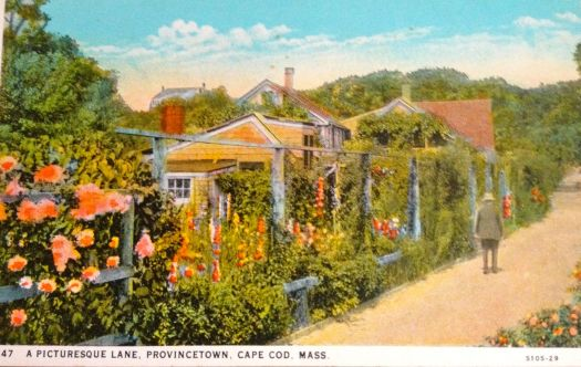 Provincetown Cape Cod lovely flower garden