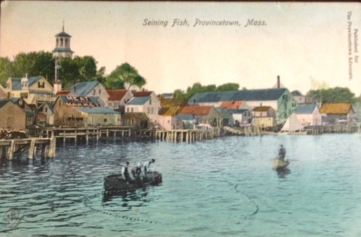 Seining FIsh Provincetown Massachusetts